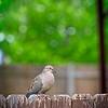 SRf2105_4182_Bird