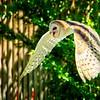 SRT1306_6774_Zoo