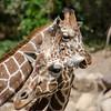 SRT1306_6674_Zoo