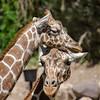SRT1306_6665_Zoo