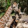 SRT1306_6662_Zoo