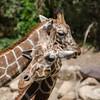 SRT1306_6673_Zoo