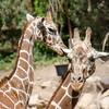SRT1306_6667_Zoo