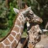SRT1306_6666_Zoo