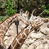 SRT1306_6669_Zoo