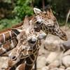 SRT1306_6672_Zoo