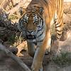 SRV1407_6273_Zoo