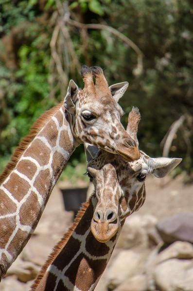 SRT1306_6663_Zoo