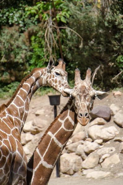 SRT1306_6668_Zoo