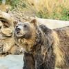 SRT1307_9403_Zoo