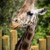 SRV1406_4595_Zoo