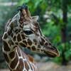SRU1308_2581_Zoo