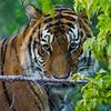 SRU1308_2553_Zoo