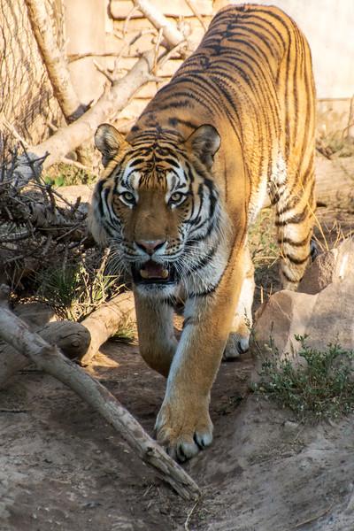 SRV1407_6273_Zoo-Edit