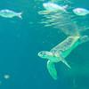 SRb1603_5147_Aquarium