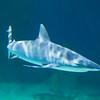 SRb1603_5145_Aquarium