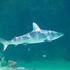 SRb1603_5139_Aquarium