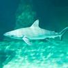 SRb1603_5131_Aquarium