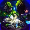 SRd1806_5457_Aquarium