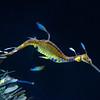 SRd1806_5451_Aquarium