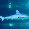 SRb1603_5166_Aquarium