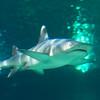 SRb1603_5114_Aquarium