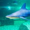 SRb1603_5163_Aquarium