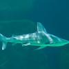 SRb1603_5137_Aquarium