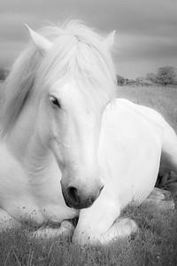 White Beauty Resting