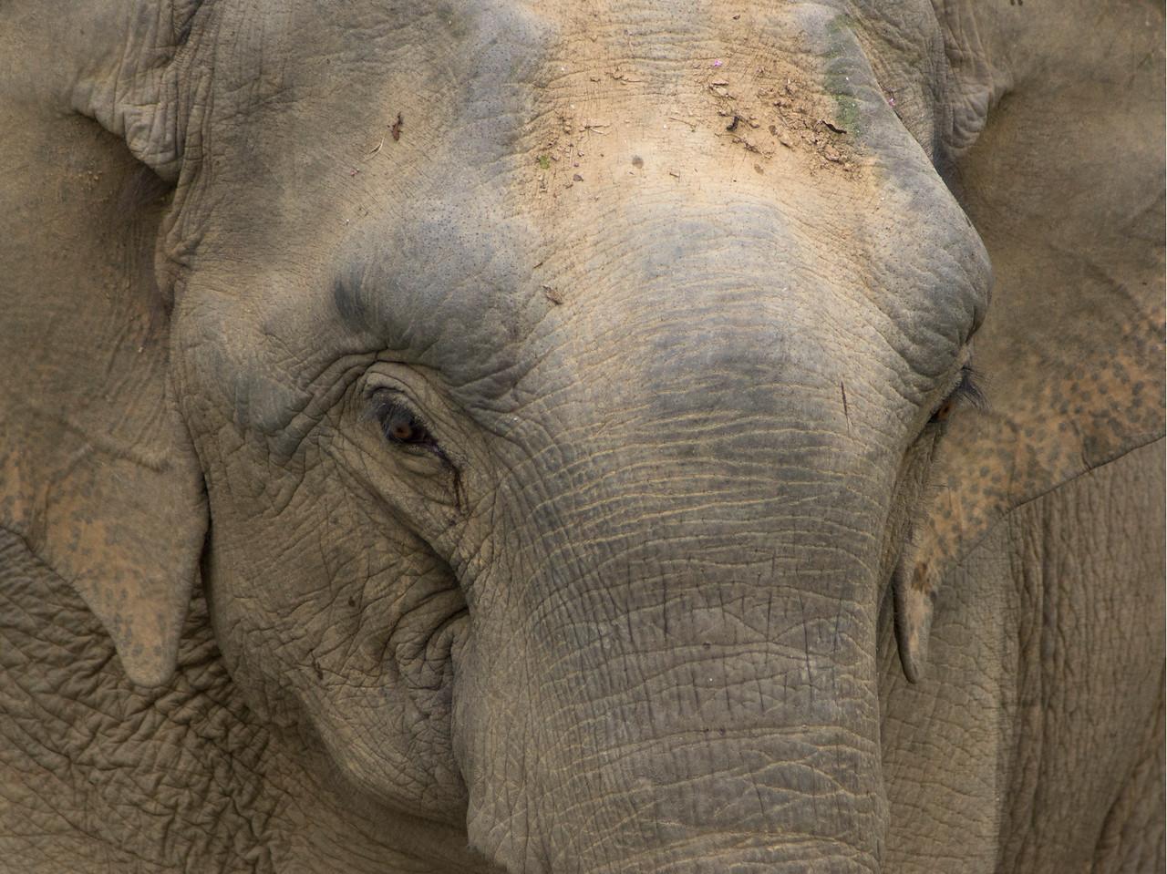 elephant, Khao Sok National Park, Cheow Lan Lake, Thailand