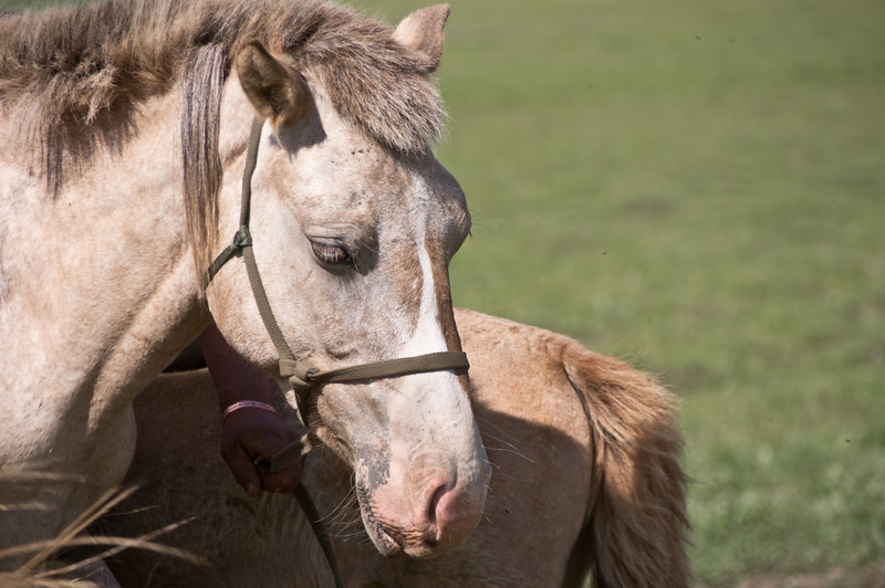 Horse, Gorkhi-Terlj National Park, Mongolia