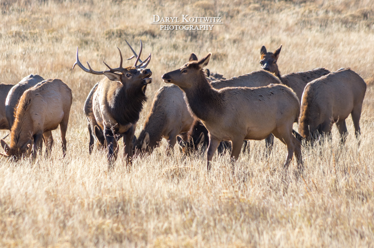 'Tis the Rutting Season