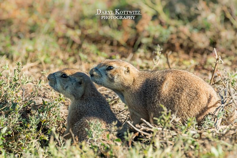 Prairie Pair