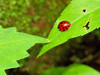 Ladybug, Ladybug, fly away!