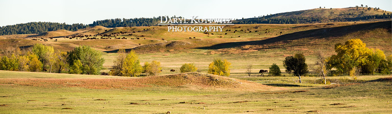 Peaceful Prairie Coexistence (Extra Wide Panorama)