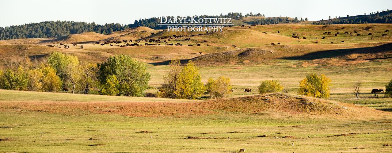 Peaceful Prairie Coexistence (Wide Panorama)