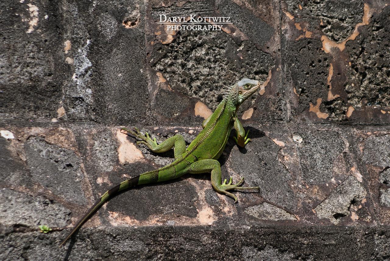 Lookin' Lizard