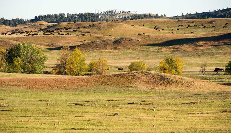 Peaceful Prairie Coexistence