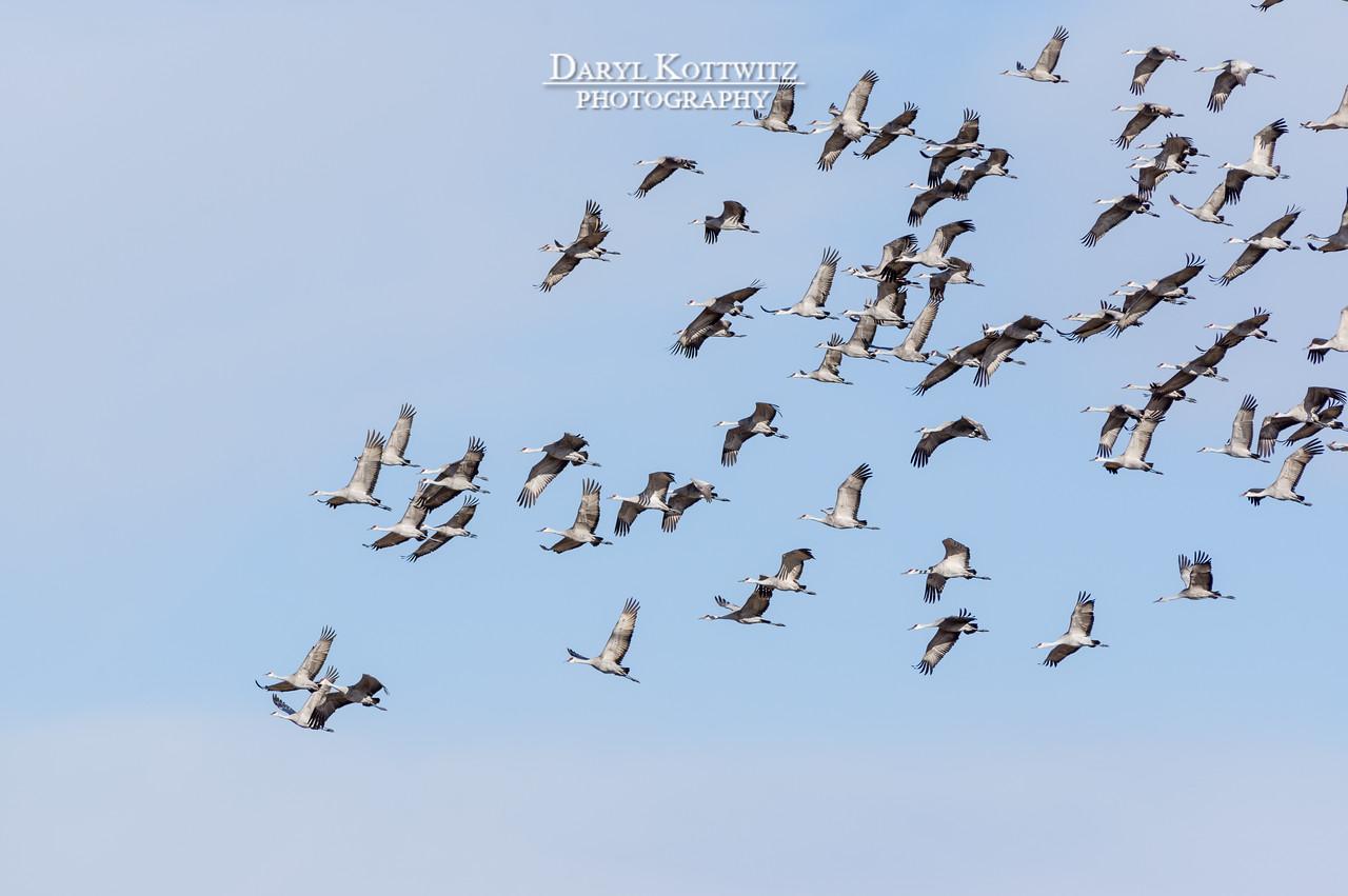 Swarm's Leading Edge