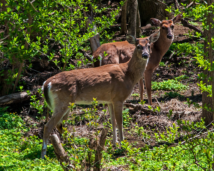 Wildlands Conservancy - Emmaus, PA - 2016