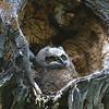 Nesting Hole