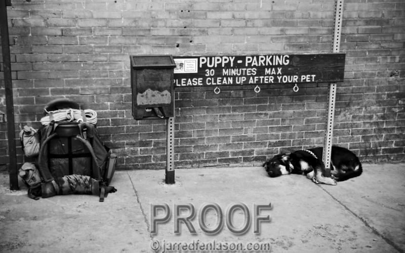 Puppy Parking