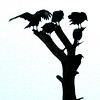 Crows in Georgetown County, SC