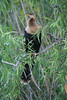 Anhinga in the Florida Everglades