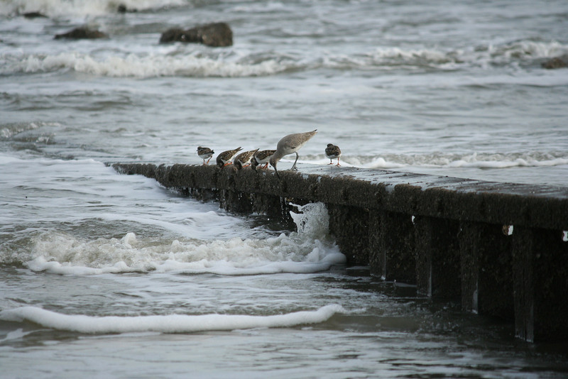 Shore birds at Hunting Island, SC