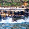 Seals at La Jolla Cove