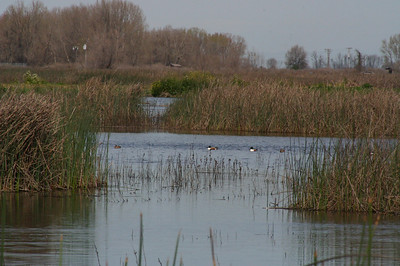 Merced National Wildlife Refuge.  California's San Joaquin Valley area