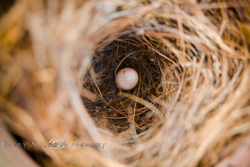 One Lonely Egg waiting in the nest - We found this in a planting pot left behind a shed while visiting Louisiana 2009