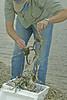 Barrel of Monkeys for a Fisherman - Chris Davis on the Bayou 2007