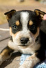 Puppy in Canyon de Chelly - Arizona 2007